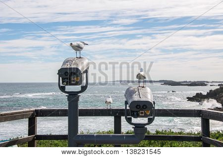 Sea gulls at Penguin Island lookout with elevated view of the Indian Ocean seascape under a blue sky with clouds in Rockingham, Western Australia.