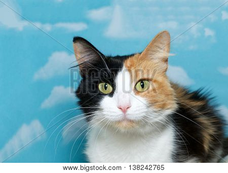 Portrait of a beautiful calico cat blue background cloud pattern with copy space