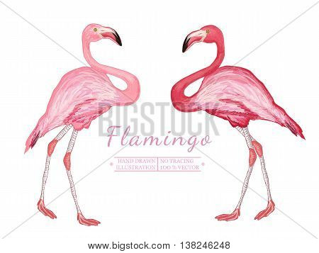Two flamingo isolated on white background beautiful pink flamingo vector