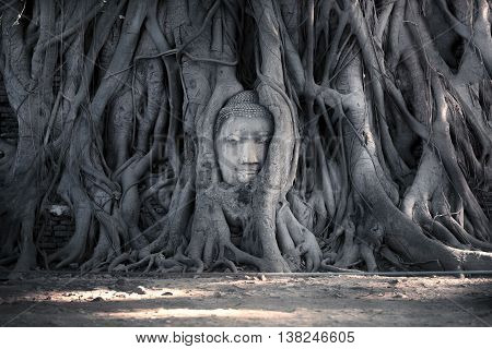 Head of Buddha statue in the tree roots at Wat Mahathat (Temple of the great relics) Ayutthaya Thailand.