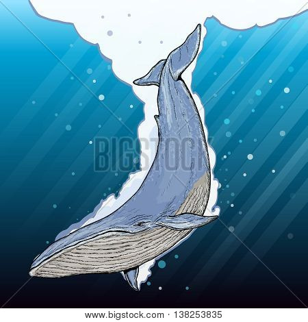Blue whale underwater cartoon vector set whale