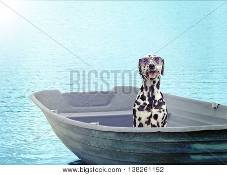 Dalmatian dog sailing on a boat. Toned photo and light effect from the left corner