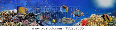 Underwater panorama with coral reef and fishes. Red Sea Egypt