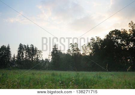 Foggy Meadow Landscape.