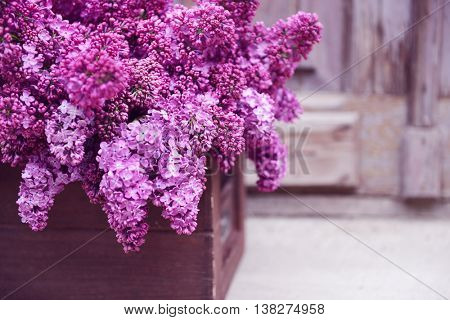 Purple lilac in wooden box on porch