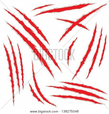 Set of claw scratches isolated on white background vector illustration