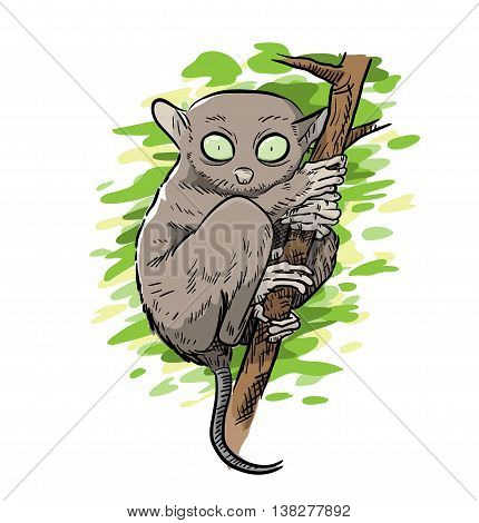 Tarsier Monkey Vector Illustration, A hand drawn vector illustration of a rare tarsier monkey (main sketch, colors, and background leaves are on separate groups and layers for easy editing).
