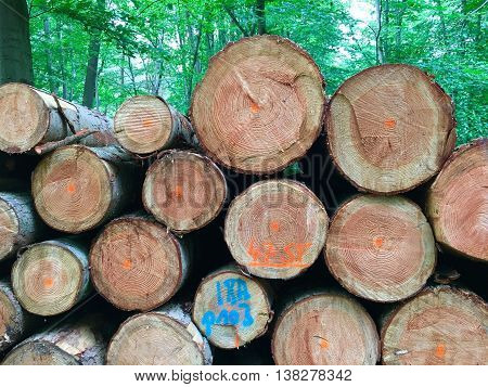 Stacked tree trunks for timber industry in the forest