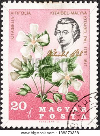 MOSCOW RUSSIA - JANUARY 2016: a post stamp printed in HUNGARY shows a portrait of Pal Kitaibel and Kitaibelia Vitifolia the series