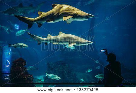 Barcelona Spain - May 26 2015. Woman take photo of shark in Barcelona Aquarium