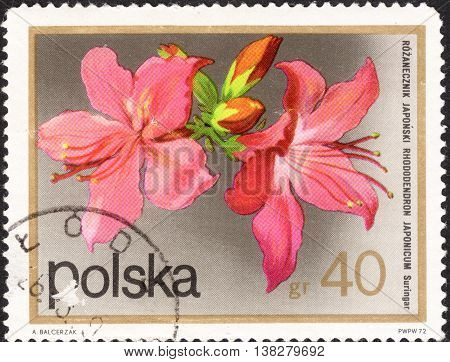 MOSCOW RUSSIA - CIRCA JANUARY 2016: a post stamp printed in POLAND shows a flower with the inscription