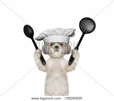Dog chef is going to prepare meals -- isolated on white