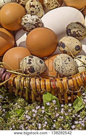 Different  Eggs In A Basket