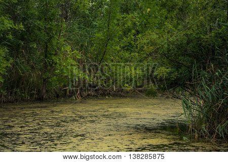 Summer landscape with little river in marshlands
