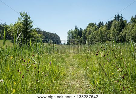 Path Through The Wetlands, Wildflower Meadow