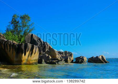 Jungle Tranquility Landscape