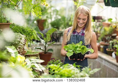 Smiling young female gardener holding saplings at greenhouse