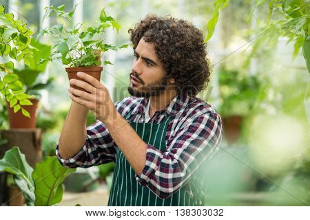 Young male gardener examining potted plant at greenhouse