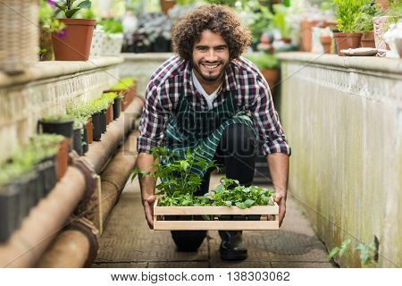 Portrait of male gardener keeping plants crate on floor at greenhouse