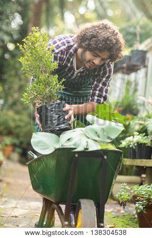 Male gardener keeping potted plants on wheelbarrow outside greenhouse