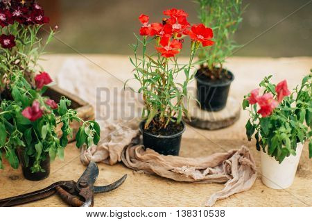 Gardener Doing Gardening Work At A Table Rustic. Working In The Garden, Close Up Of The Hands Of A W