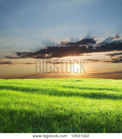 Green field on sunrise