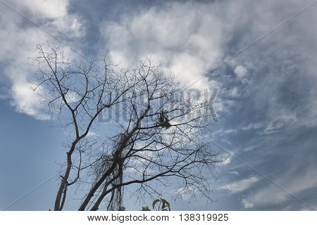 branch and leaf of tree beautiful in the forest under sky, Image Low Key