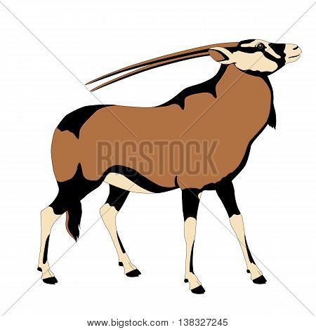 oryks adult antelope color vector illustration profile