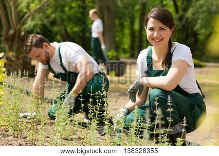 Three Gardeners At Work