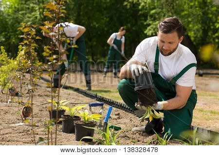 Gardener  Taking The Flower From The Pot