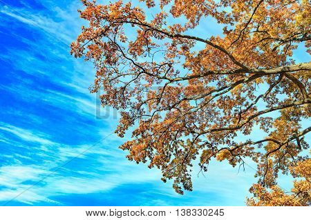 autumn with red leaves on a blue sky background