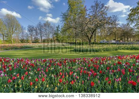view of flowerbed in Keukenhof garden Netherlands