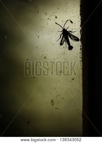 Unusual fly on the old dirty window mood background