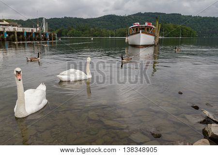 Swimming Swans, Pier And Boat In Lake On Bowness-on-windermere, Uk