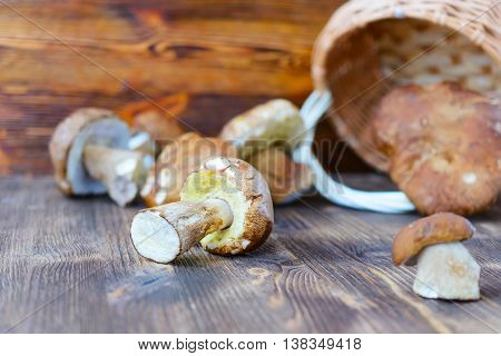 Placer white mushrooms in a wicker basket. Rustic wooden background.