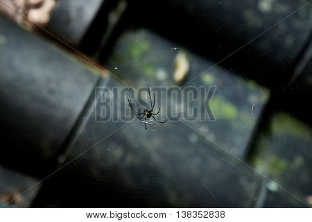 Large, black spider in web over Japanese roof shingles