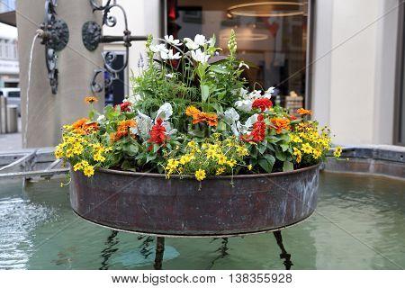 Urban Street Flowers