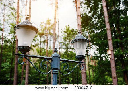 Lantern At Pine Wood On Sunny Background