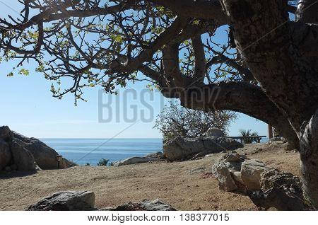 Trees and rocks near sea, San Jose del Cabo, Baja California Sur, Mexico