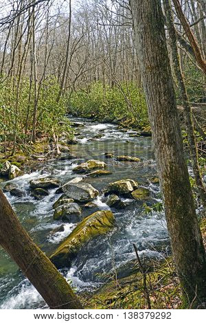 Little River in the Smoky Mountains in Early Spring in Tennessee