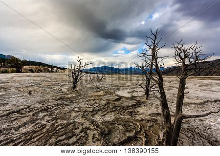 The unearthly landscape of Mammoth hot spring in Yellowstone National Park