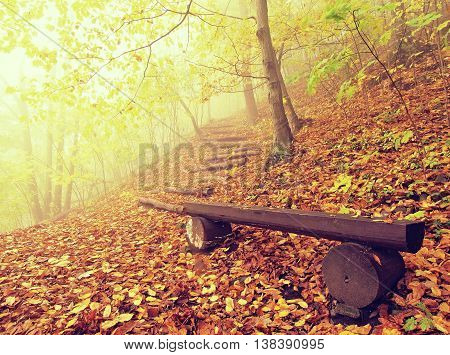 The autumn misty and sunny daybreak at beech forest, old abandoned bench below trees. Fog between beech branches without leaves.