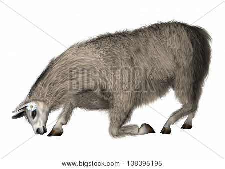 3D illustration of a llama or Lama glama a domesticated South American camelid isolated on white background