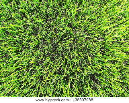 View into plastic grass, artificial green turf texture background.