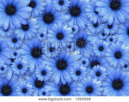 Background Made From Blue Flowers