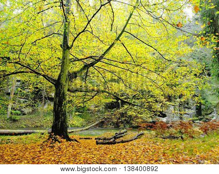 Big boulders with fallen leaves. Autumn mountain river banks. Gravel and fresh green mossy boulders on river banks covered with colorful leaves from beeches, maples and birches.