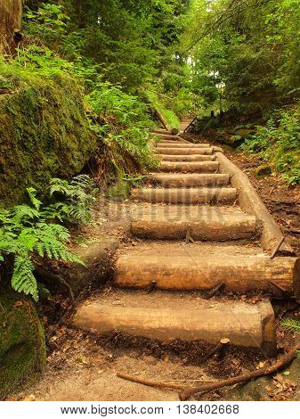 Old wooden stairs in overgrown forest garden, tourist footpath. Steps from cut beech trunks, fresh green branches above footpath