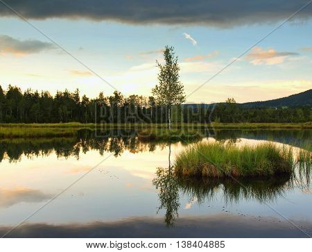 Swamp with peaceful water level in mysterious forest, young tree on island in middle. Fresh green color of herbs and grass, heavy clouds in sky.