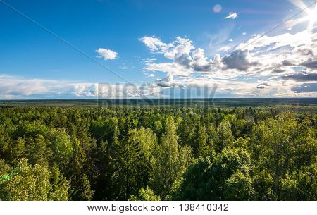 Summer landscape. Tree tops, aerial view. Nature landscape.