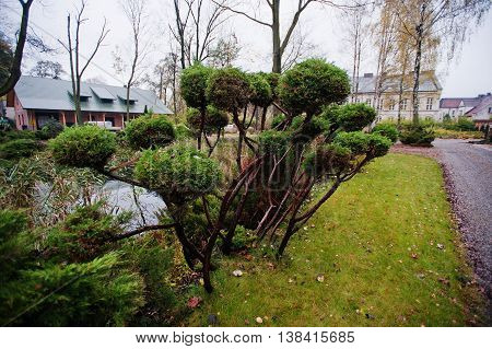 Many green coniferous bushes near pond outdoor